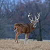 Great Places To Hunt Deer In The USA