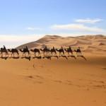 Mehare with camel trekking ...
